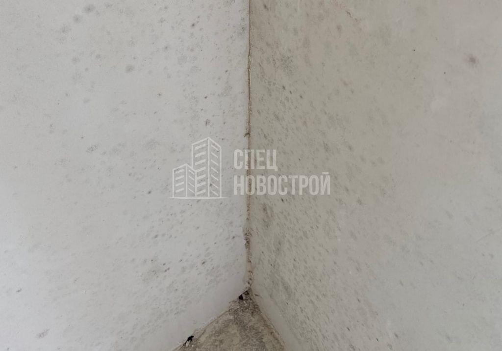 наличие плесени на оштукатуренных поверхностях стен
